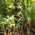 初夏ー秋口までのシーズンは特に、庭でとれたハーブを使います。