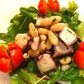 タコと豆のインサラータ