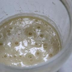 天然酵母生種