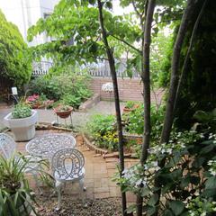 ガーデンのハーブはドリンクやお料理に