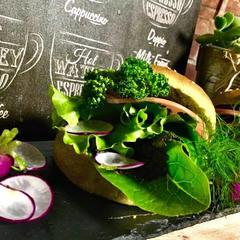 家庭菜園の野菜たっぷりと。
