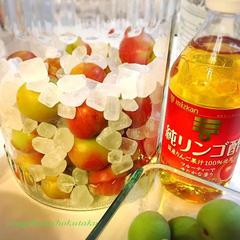梅シロップの検証 白砂糖・氷砂糖&お酢