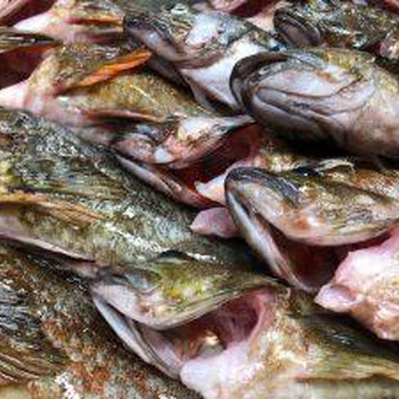 包丁研ぎ&お魚さばき教室