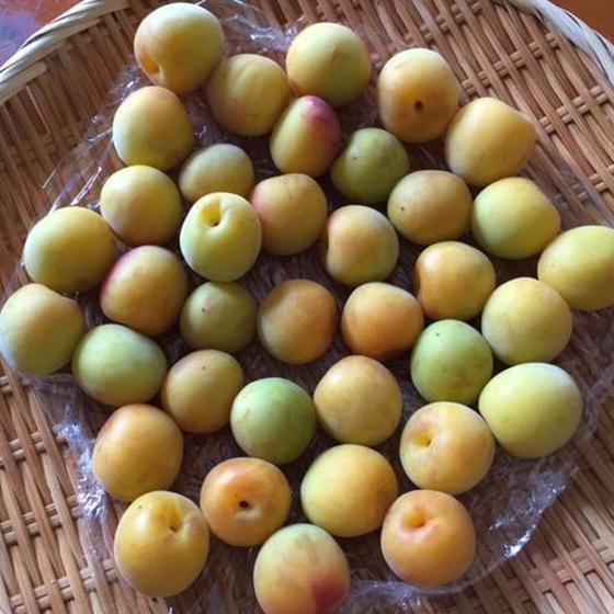 旬の保存食レッスン~梅酒、梅シロップ