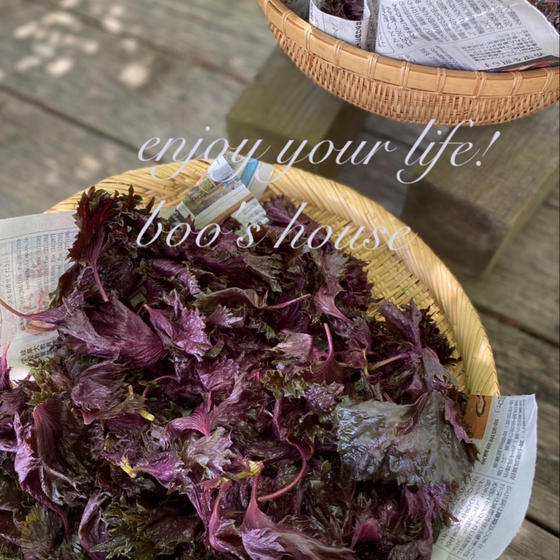 【季節の手仕事の会】旬食材でシロップ&基本の糠床作り