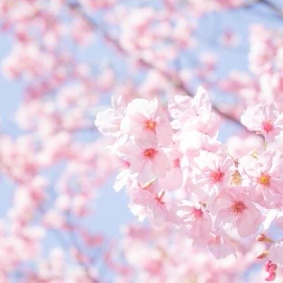 3周年記念 春の1日満喫レッスン