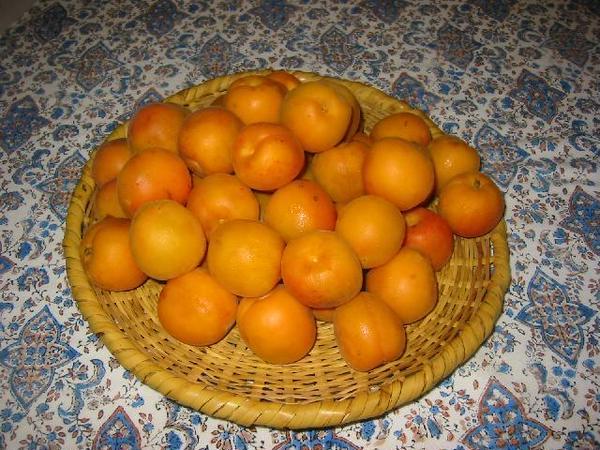 季節の果物でジャムを炊きます、これは信州のアンズです