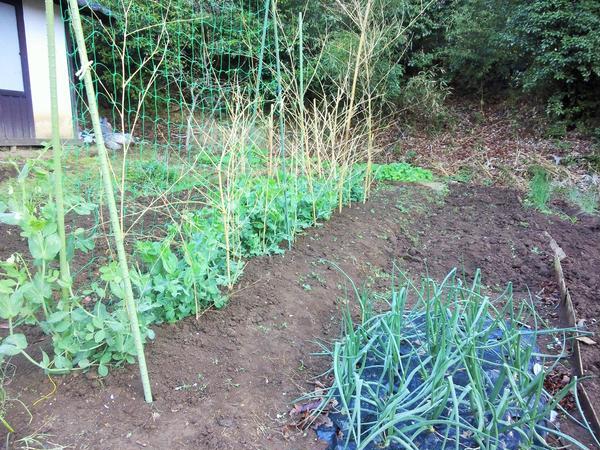 借りた畑の野菜も登場! 虫と草との闘い