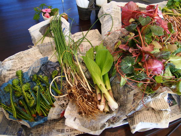 山菜や野草の収獲とクッキング教室の収穫物!!