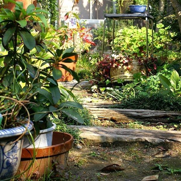 自慢のお庭です